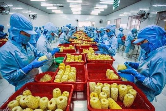 Ngành chế biến nông sản Việt Nam hướng tới mục tiêu lọt TOP 10 nước hàng đầu thế giới